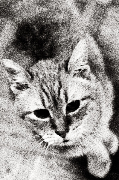 Black and White photograph of Sunny the Cat