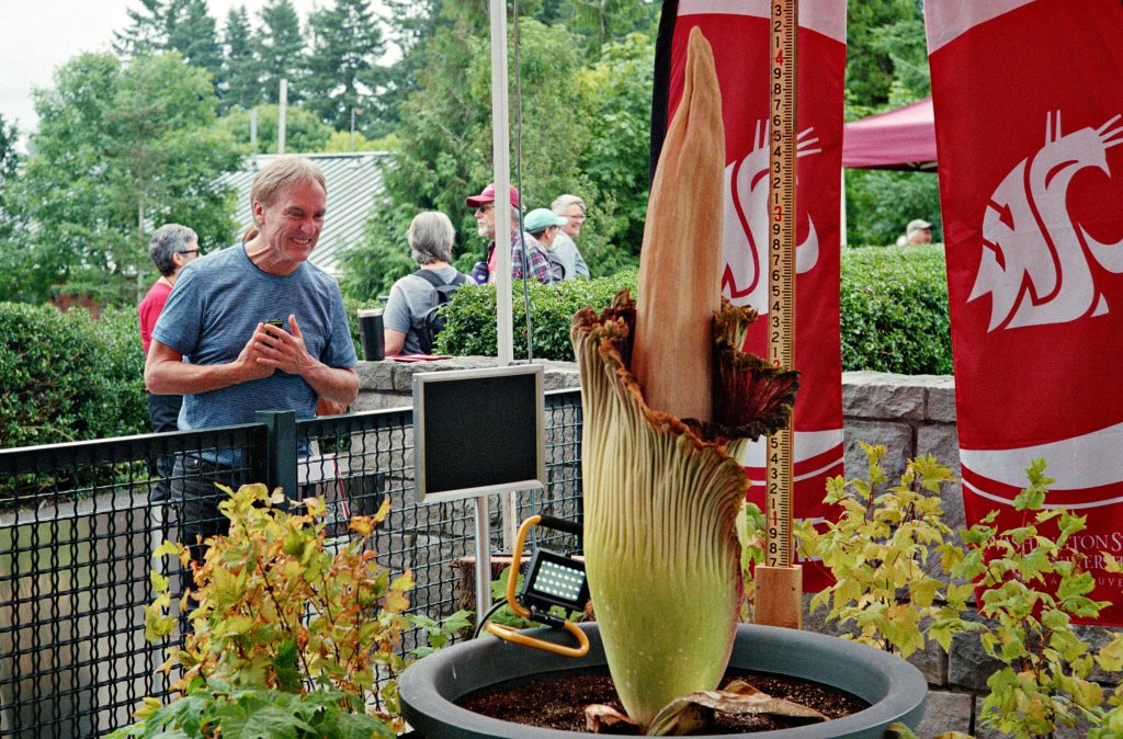 Corpse Flower with smiling man leaning over fence to see it.